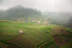 Indonesien risterrasser, på det höga berget Royaltyfri Foto