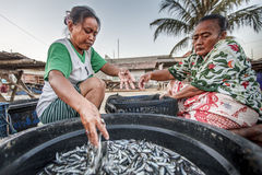 INDONESIEN-SEEwirtschaft Lizenzfreie Stockfotografie