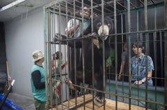 INDONESIEN-UMWELT-VERSCHIEDENARTIGKEIT Stockfoto