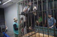 INDONESIEN-UMWELT-VERSCHIEDENARTIGKEIT Stockbild