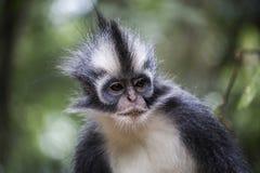 Indonesisch Regenwoud royalty-vrije stock foto