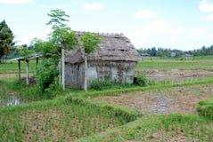 Indonesisch rijstlandbouwbedrijf stock foto's