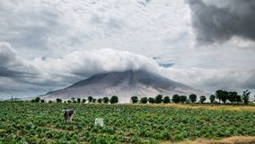 Indonesische Frauen, die unter Sinabungs-Vulkan arbeiten stockfotos