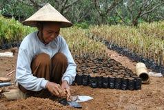 Indonesische fruitlandbouwers Stock Foto
