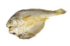 Indonesische gesalzene Fische Lizenzfreies Stockbild