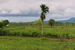 Indonesische Natur lizenzfreie stockbilder