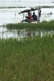 INDONESISCHE RUPIE SECHS JAHRE NIEDRIGE TROPFEN- Lizenzfreie Stockbilder