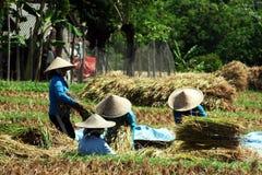 Indonesischer Landwirt lizenzfreies stockfoto