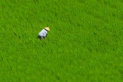 Indonesischer Landwirt, der auf einem Reisgebiet arbeitet Lizenzfreie Stockfotos