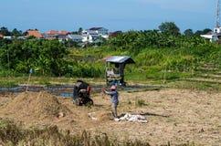 Indonesischer Landwirt, der an einem Reisfeld arbeitet Lizenzfreie Stockfotos