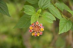 Indonesisk flora Arkivfoto