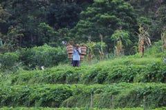 Indonesiskt organiskt lantbruk Royaltyfri Fotografi