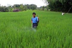 Indonesiskt organiskt lantbruk Arkivfoton