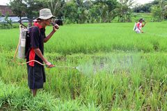 Indonesiskt organiskt lantbruk Royaltyfria Bilder