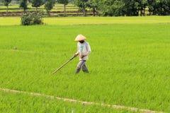 Indonesiskt organiskt lantbruk Arkivbilder