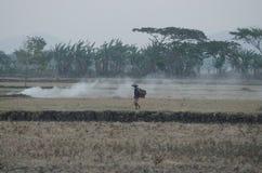 INDONEZJA klimat zdjęcie stock