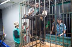 INDONEZJA problemy ochrony środowiska Obraz Royalty Free