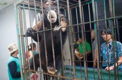 INDONEZJA problemy ochrony środowiska Zdjęcie Royalty Free