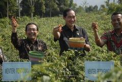 INDONEZJA rolnictwa eksport Fotografia Stock