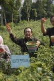 INDONEZJA rolnictwa eksport Zdjęcia Royalty Free