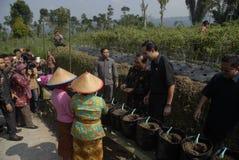 INDONEZJA rolnictwa eksport Obrazy Stock