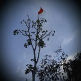 INDONEZYJCZYK flaga zdjęcia royalty free