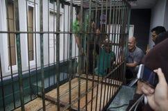 INDONEZYJCZYKA niedźwiedzia ratunek Obrazy Royalty Free
