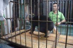 INDONEZYJCZYKA niedźwiedzia ratunek Zdjęcia Royalty Free