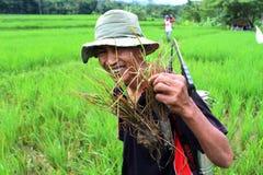 Indonezyjski Organicznie Uprawiać ziemię Zdjęcia Royalty Free