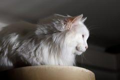 Indoor cat stock photos