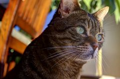 Cute tabby cat. Portrait of cute tabby cat in home Stock Photo