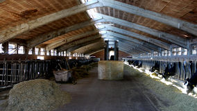 Indoor dairy farm Royalty Free Stock Photos