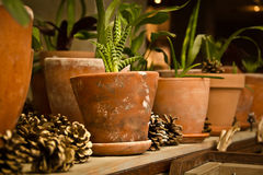 Indoor decoration of cones and plants Stock Photo