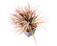 Indoor decoration plant Stock Photography