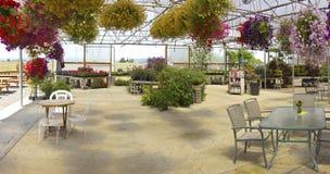 Indoor flower display Willamette valley Oregon. Royalty Free Stock Photo