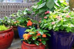 Indoor Flower Gardening Royalty Free Stock Image