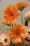 Indoor flowers. Close-up of flowers in an indoor arrangement Royalty Free Stock Photos