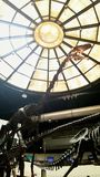 Indoor fossil of Dinosaurs show under glass dome Royalty Free Stock Photo