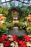 Indoor garden Royalty Free Stock Image