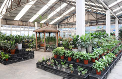 The indoor garden. In a greenhouse Stock Photo