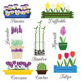Indoor and Garden Flowers in Pots Vector Set. Home and seasonal flowers vector illustration. Icons, design elements, labels royalty free illustration