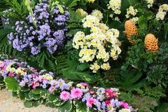 Indoor garden Stock Images