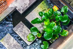 Indoor Garden Pond royalty free stock image