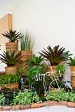 Indoor garden for room corner decoration. In a place Royalty Free Stock Image
