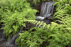 Indoor garden with waterfall  design Stock Photography