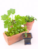 Indoor gardening Stock Images