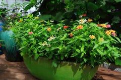 Indoor Gardening Stock Photos