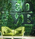 Indoor green grass and plant wall with love word and classic sof Stock Photos