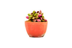 Indoor green-and-pink cactus. Small green-and-pink cactus in a cray pot Stock Photography