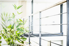 Indoor green plant in modern room Stock Photography
